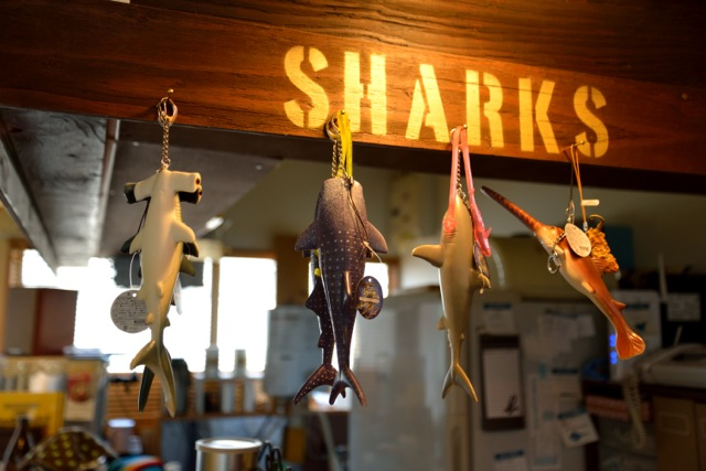 140404 sharks 03
