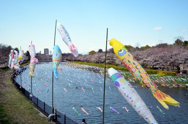 140424 tatebayashi koinobori 11